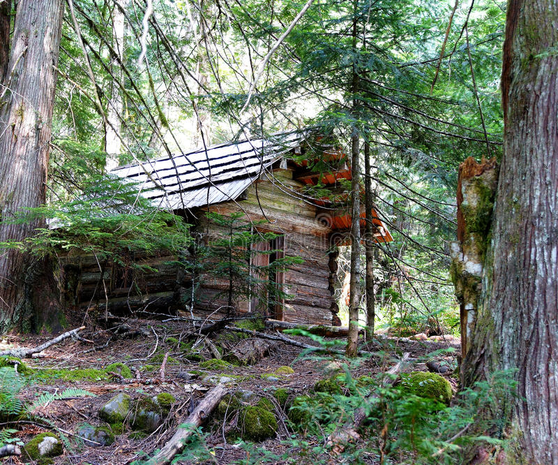 Log cabin in conifer forest stock photography