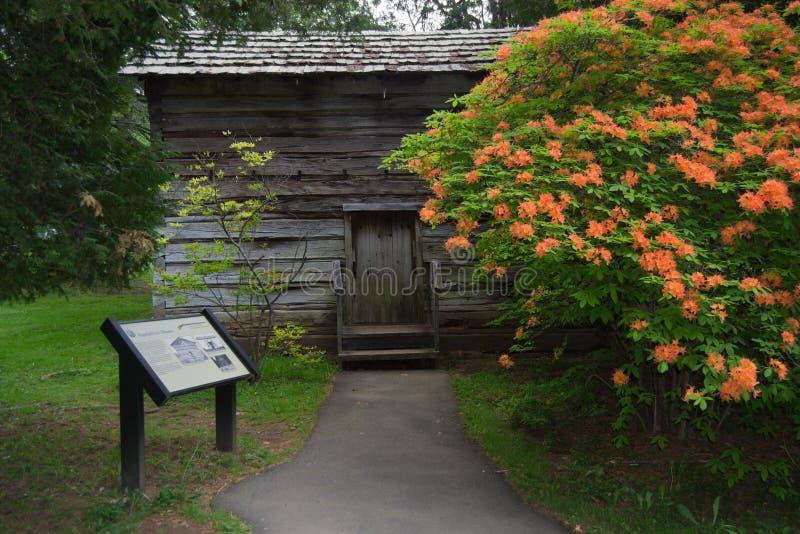 Log Cabin with Flaming Azalea- Blue Ridge Parkway, Virginia, USA royalty free stock photos
