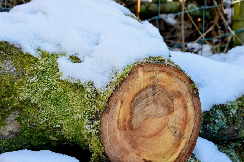 Log coberto de neve fotografia de stock royalty free
