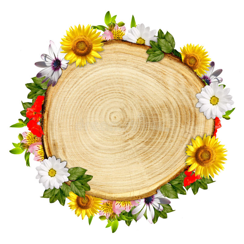 Download Log Cross Section With Flowers Stock Photos - Image: 26035783