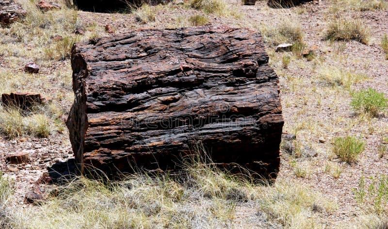 Log da madeira hirto de medo imagens de stock