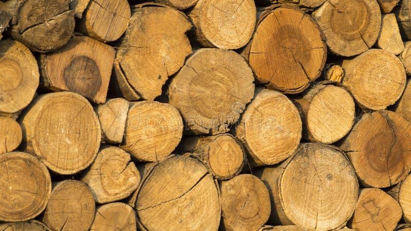 Log de madeira fotografia de stock royalty free