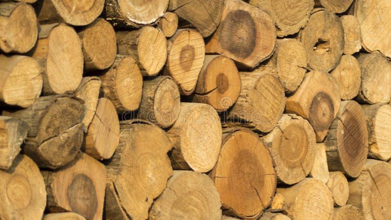 Log de madeira imagens de stock