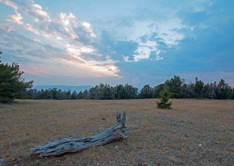Log de madeira inoperante no por do sol em Tillett Ridge nas montanhas de Pryor em Montana EUA imagens de stock