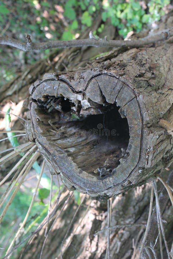 Log do coração imagens de stock