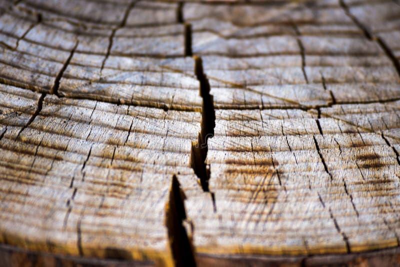 Dry log royalty free stock photos