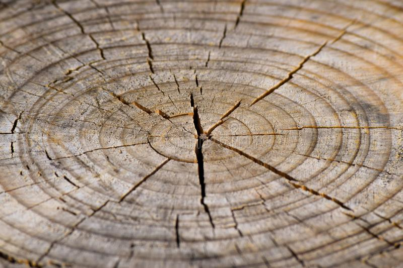 Dry log royalty free stock photography
