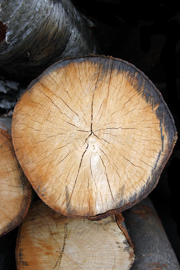 Log End 1 royalty free stock photos