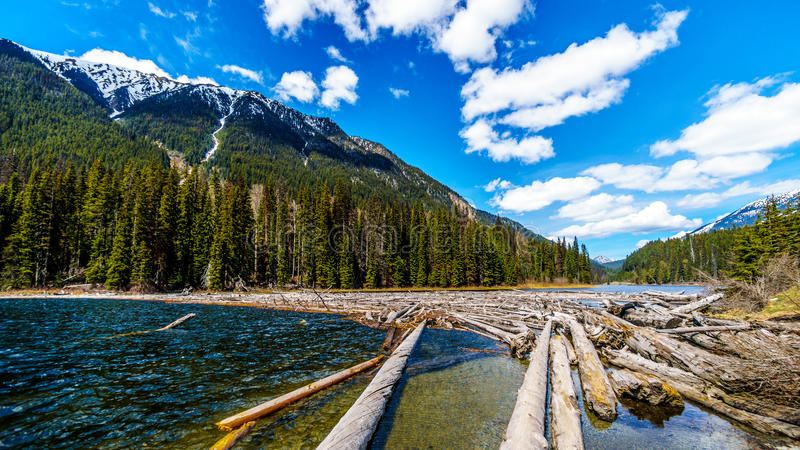 Log jam at the north end of Duffey Lake. In the Coast Mountains. The lake is part of the Cayoosh Creek that runs along the Duffey Lake road between Pemberton royalty free stock image