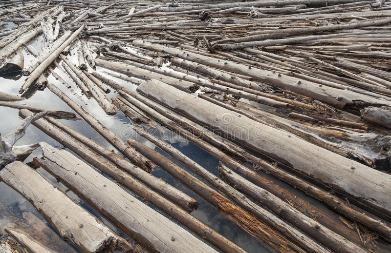 Download Log Jam Of Tree Trunks Floting On A River Stock Photo - Image: 32051372