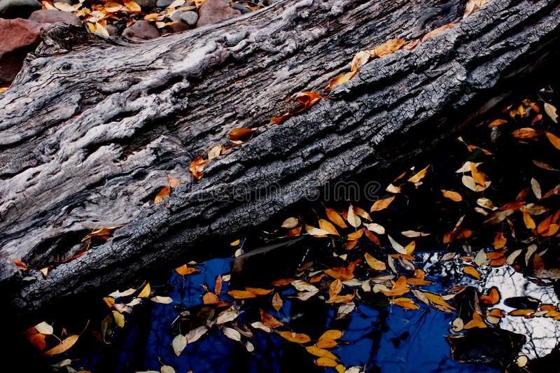 Log And Leaves Free Stock Photos