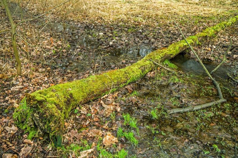 Log lying across the brook in the forest. stock images