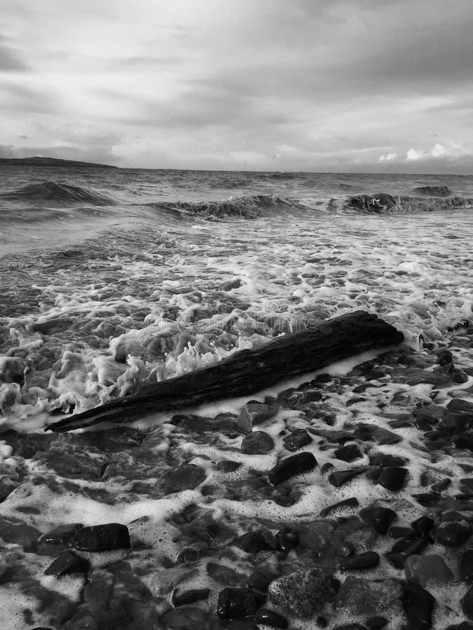 Log na praia em preto e branco imagem de stock royalty free