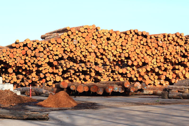 Log Pile in the NW. A large pile of cut logs, ready for shipping or to the saw mill stock photo