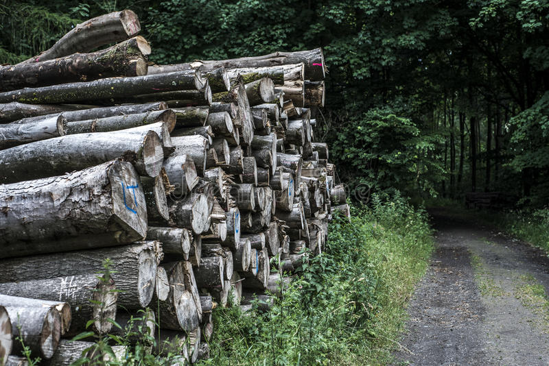 Log pile stack forest wood track mud road offroad way puddle landscape background royalty free stock photo