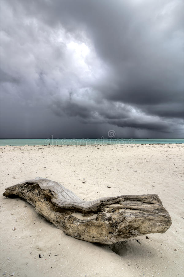 Download Log on sandy beach stock photo. Image of shore, rain - 26370232