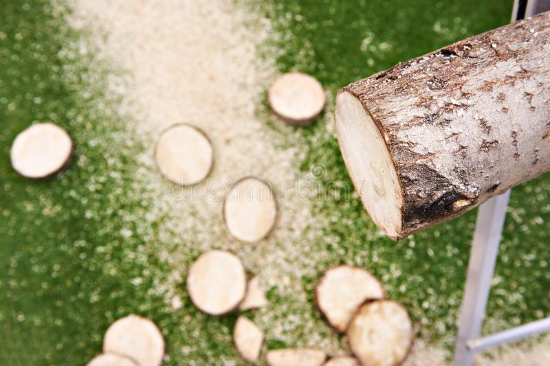 Log and sawn pieces stock photo
