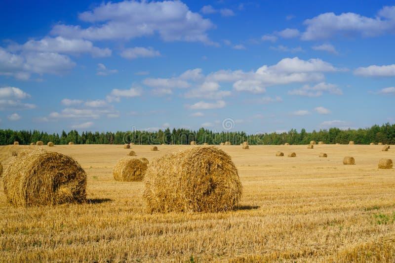 log siano Rolnictwa againt śródpolny niebieskie niebo Wiejska natura w zdjęcia stock