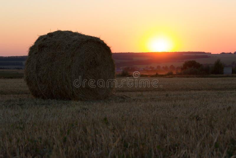 log siano Rolnictwa pole z niebem obraz royalty free