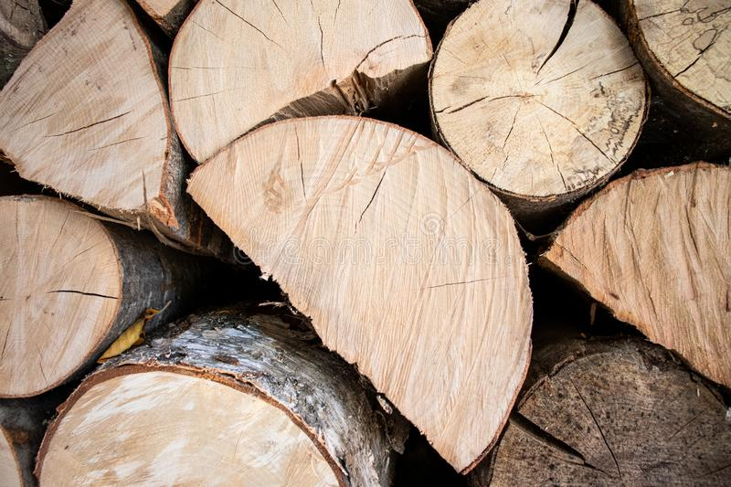 Tree logs pile forest wood carpentry stock photo