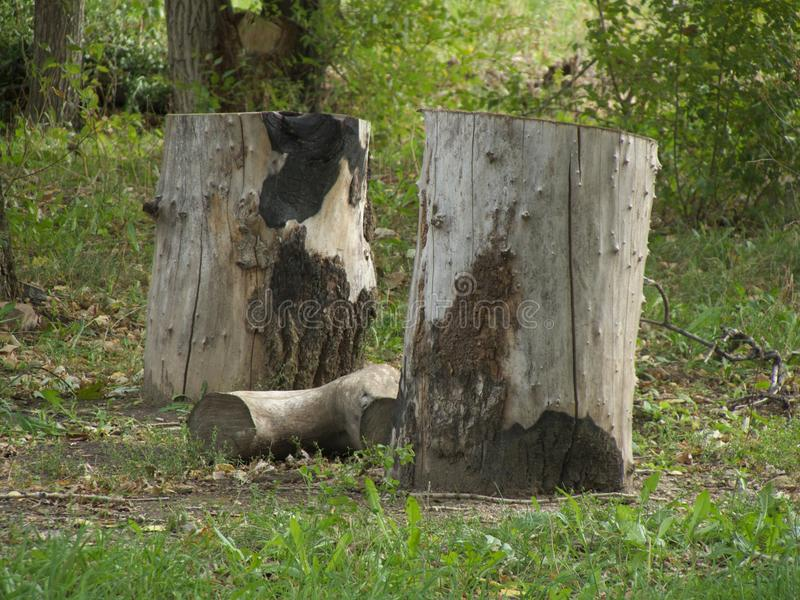 A log between two stumps royalty free stock images