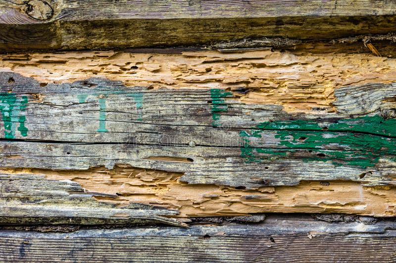 Timber affected by woodworm. A log in the wall of an old house struck by a woodworm stock images
