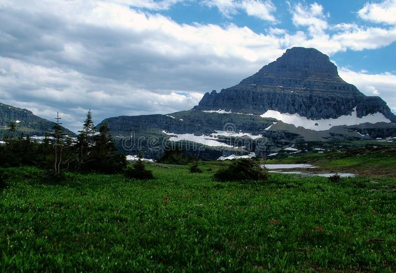 Logan's Pass, Early Spring. Snow pack lingers on a mountain overlooking Logan's Pass in Glacier National Park, Montana. Wild flowers peek through the meadow stock photos