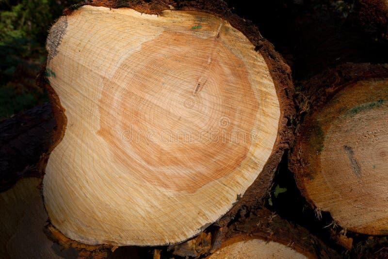 Logarithme naturel de bois de construction photos stock