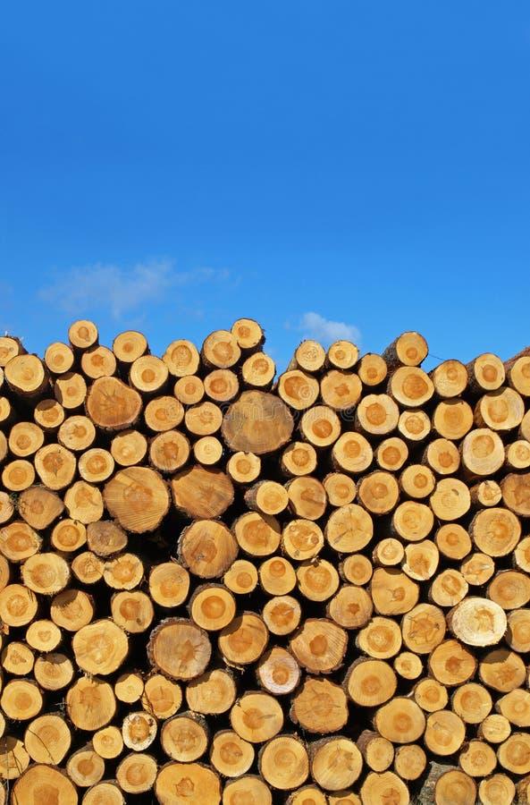 Logarithmes naturels d'arbre image libre de droits