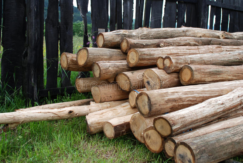Logarithmes naturels d'arbre crus photographie stock