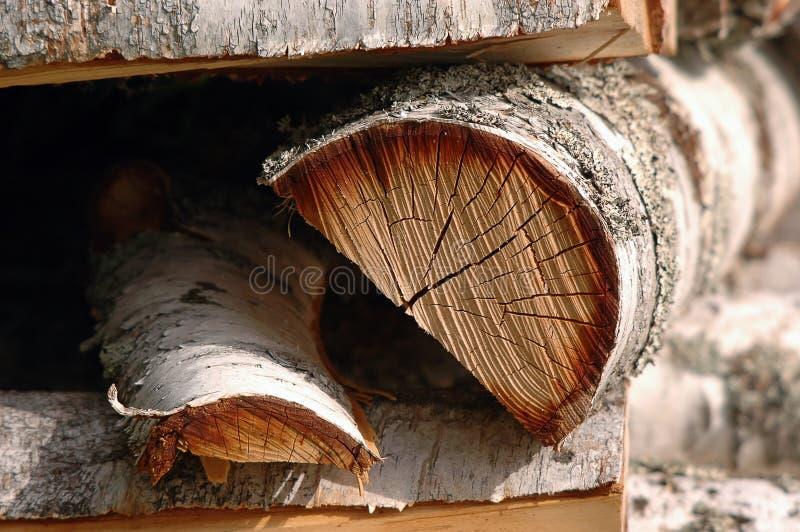 Logarithmes naturels d'arbre de bouleau photographie stock