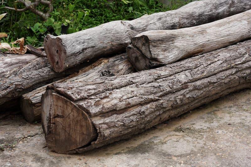 Logarithmes naturels de bois photo stock