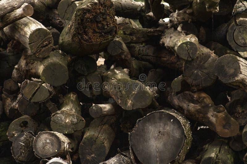 Logarithmes naturels de bois photos stock