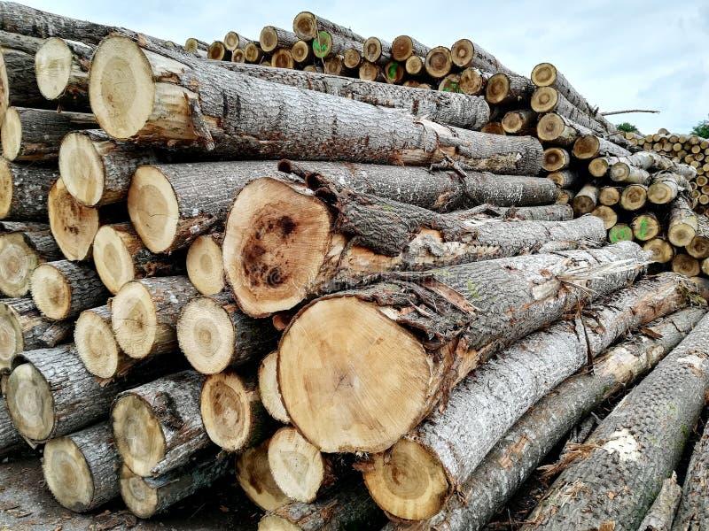 Logarithmes naturels en bois image libre de droits