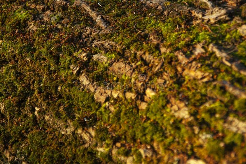 Logboek dat met mos wordt behandeld royalty-vrije stock afbeelding