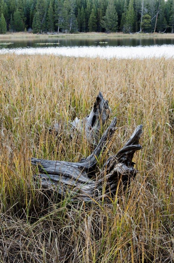 Logboek en Gras langs Meer stock afbeelding