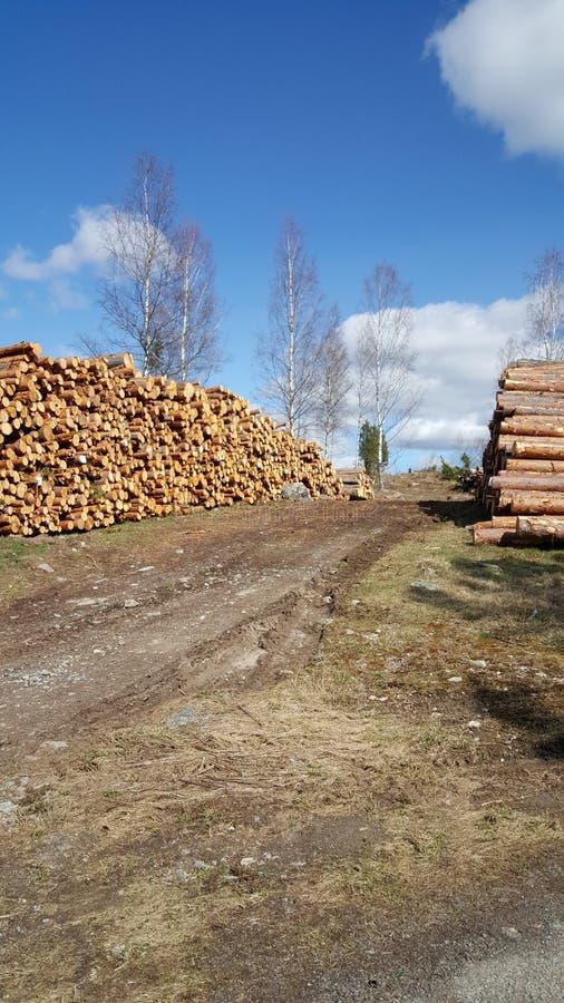 logboekhout stock foto
