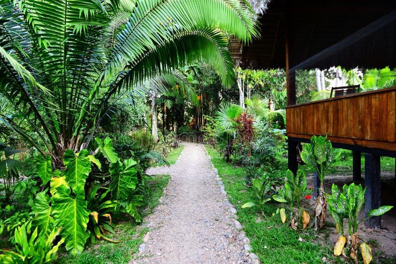 Loge dans les jungles photographie stock libre de droits