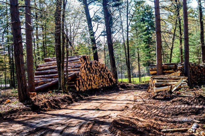 Logement dans une forêt de pins photo libre de droits