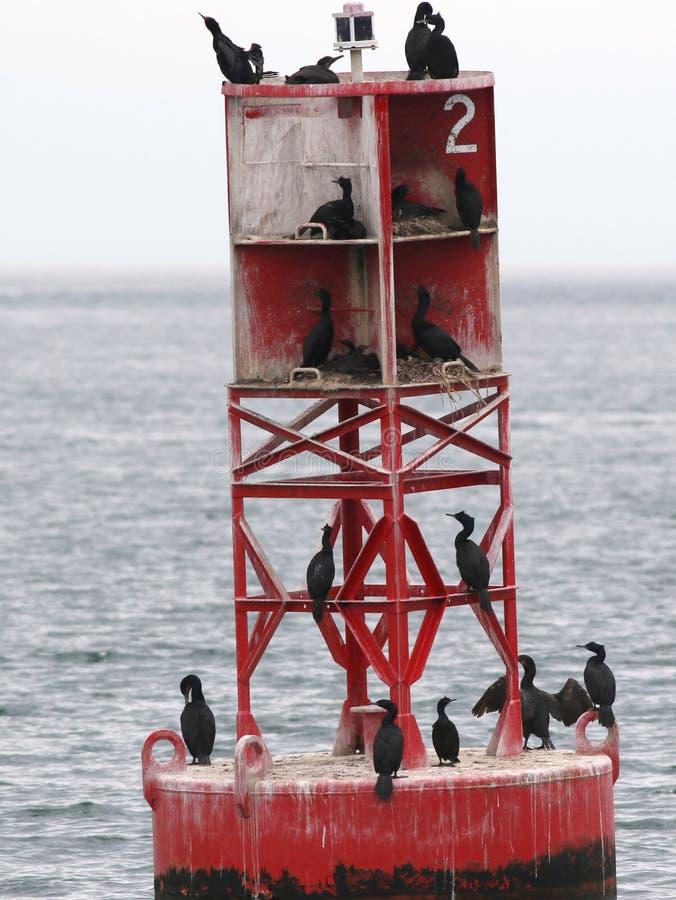 Logements de Cormorant photos stock