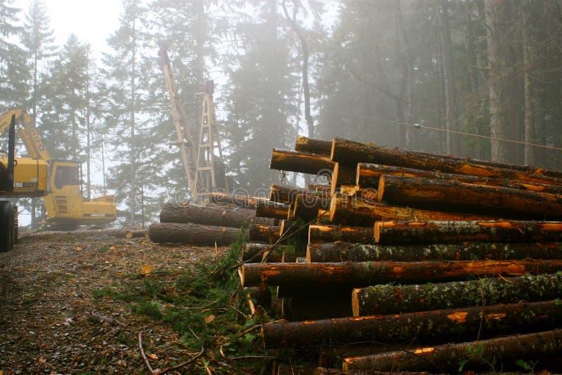 loggad för skog arkivbild