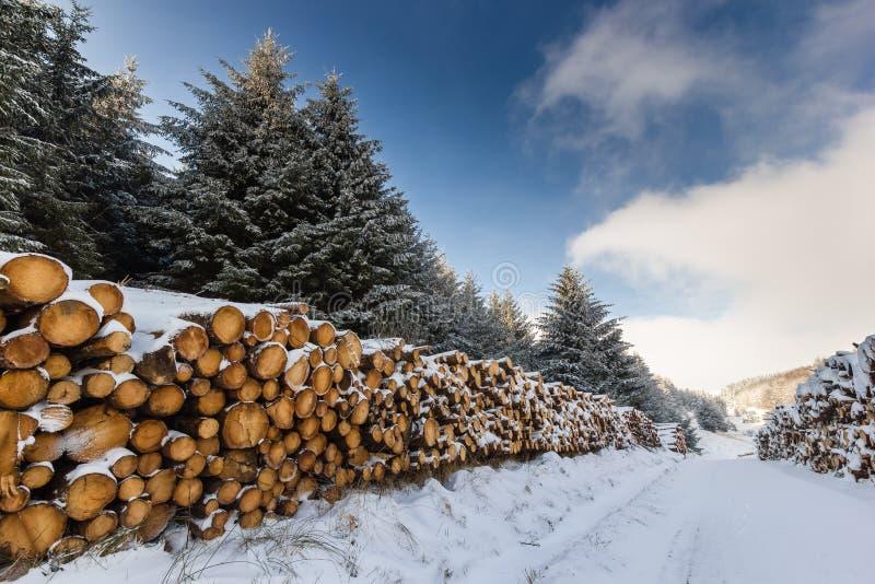Loggar dolda trees för Snow och royaltyfri fotografi