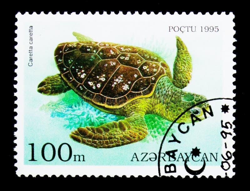 Loggerhead (Caretta-caretta), Schildpadden en Schildpadden serie, circa royalty-vrije stock fotografie