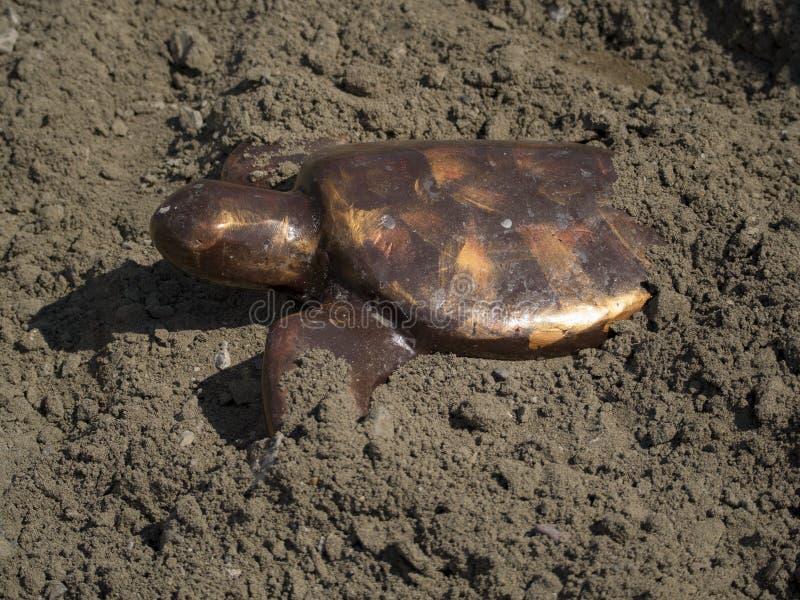Loggerhead Schildpad Hatchling Dalyan Turkije royalty-vrije stock afbeeldingen