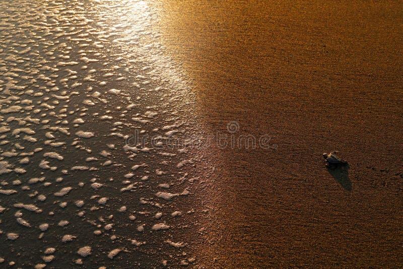 Loggerhead Zeeschildpad, Caretta-caretta, die geboorte op het zandstrand gelijk maken, Corcovado NP, Costa Rica Eerste kleine min royalty-vrije stock foto