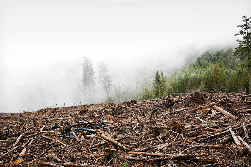 Logging. An area of forest logged on Vancouver Island in British Columbia stock photography