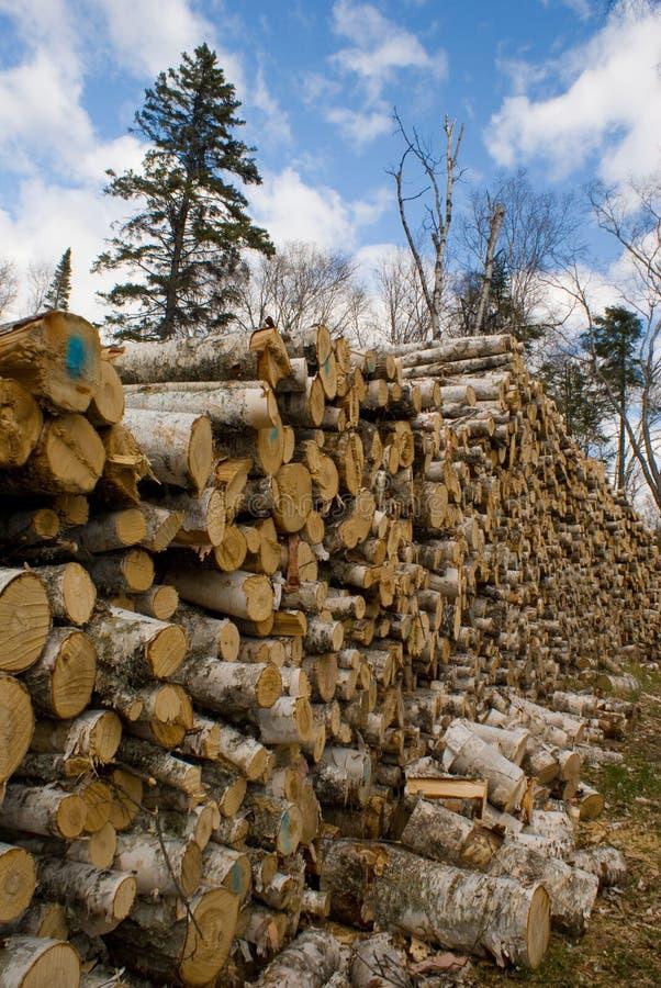 Logging royalty free stock image