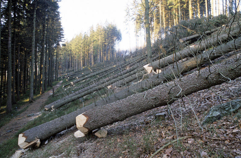 Logging stock image