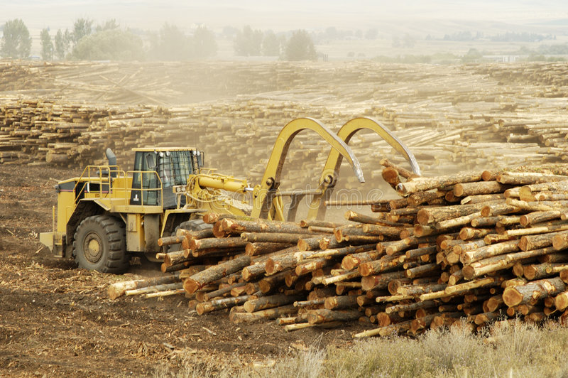 Logging Equipment 6. Lumber being processed at a forest products sawmill stock image