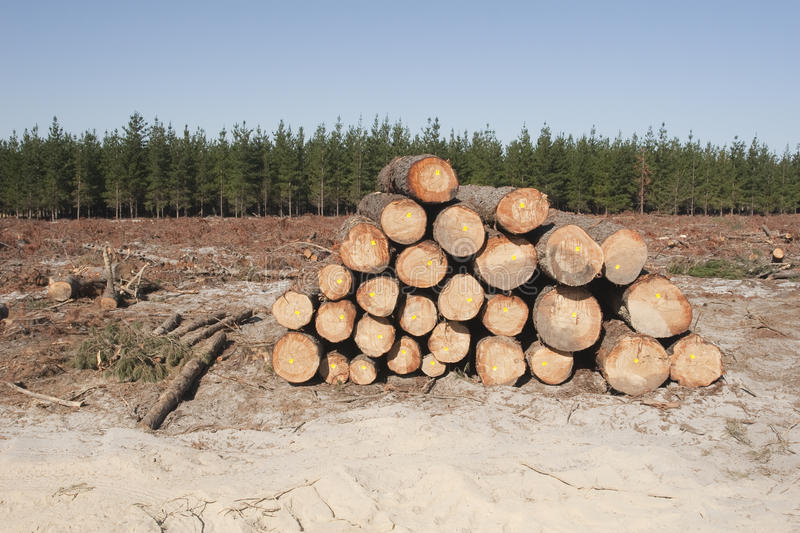 Logging in a forest stock images